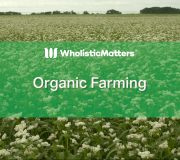 Feature Image: Organic Farming
