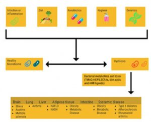 Flow chart outlining dysbiosis in the gut and the factors that contribute to a healthy or dysbiotic microbiome.