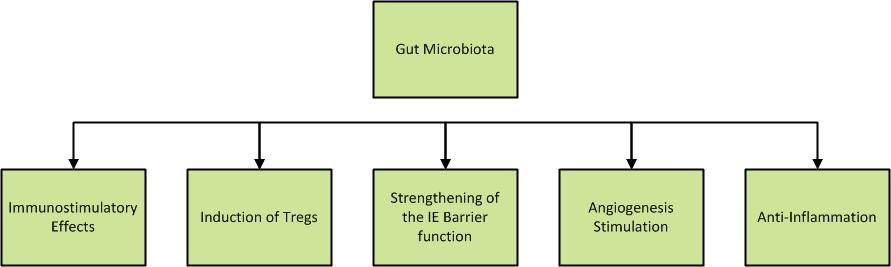 Concept map outlining various physiological roles of gut microbiota.