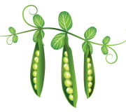 Feature Image: Tiny and Mighty: The Uncommon Properties of the Common Pea Vine