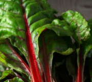 Feature Image: Swiss Chard: Nutrient and Phytonutrient Profile