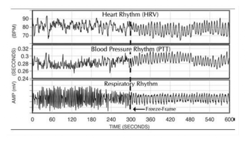 Readout representing the differences in HRV, PTT, and respiratory rhythm in a single human being.