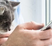 Feature Image: Applying the Wholistic Approach to Pet Care
