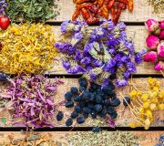 Feature Image: Herbs for Stress, Sleep, and Nervous System Health
