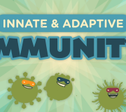 Feature Image: Innate and Adaptive Immunity