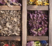 Feature Image: Botanicals for Inflammation