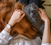 Feature Image: Glandular Therapies for Pet Care