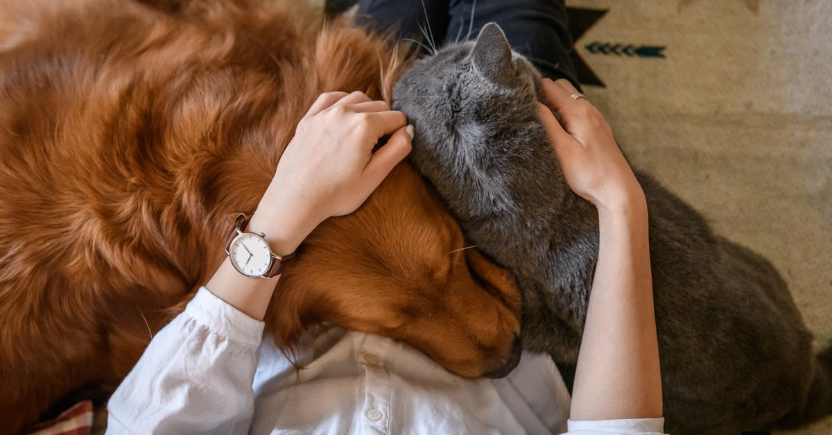 glandular therapies for pets