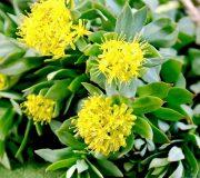 Feature Image: Understanding Herbal Adaptogen vs. Tonic