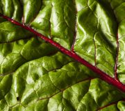 Feature Image: Low Maintenance and Highly Nutritious: Swiss Chard