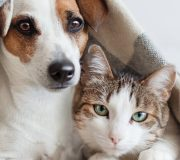 Feature Image: Emotional Health in Pets: Relieving Stress and Anxiety