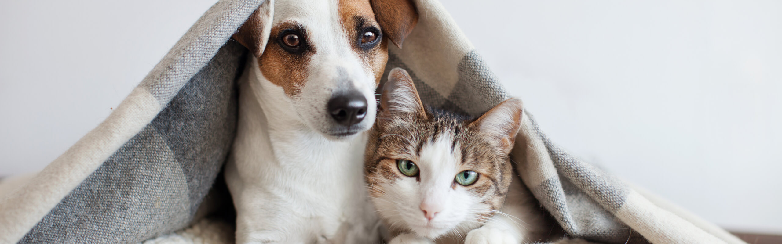 emotional health in pets